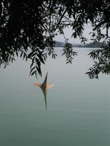 auf dem Greifensee